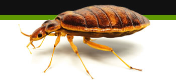 bed bug removal nottingham